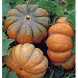 (Musque de Provence Pumpkin 10 Seeds - Fairytale )