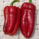 Red Marconi Sweet Pepper 30 Seeds
