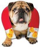 Chick Magnet Costumes - Rasta Imposta Chick Magnet Dog Costume,