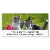 Love of Cats Self-Adhesive, Flat-Sheet Deluxe Address Labels by Colorful Images (12 Designs), Count 144