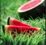 Sugar Baby Watermelon Seeds, 100+ Premium Heirloom Seeds, ON SALE!, (Isla's Garden Seeds), Non Gmo Organic, 85% Germination