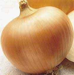 Onion Yellow Sweet Spanish Great Heirloom Vegetable 300 Seeds