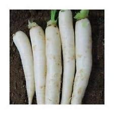 Used, 1000 Japanese Minowase Radish Seeds [Daikon ] New Seeds for sale  Delivered anywhere in Canada