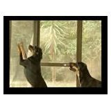 Super Screen - Pet and Weather Resistant Insect Screen (72'' x 100') by Super Screen (Image #2)