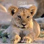 Lions 2010 Wall Calendar