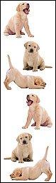 Labrador - Animals - Mrs Grossmans Sticker Strips