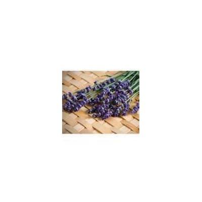 HOT - 100 Heirloom Evergreen Perennial, Lavender 'Munstead' Seeds : Garden & Outdoor
