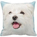 "Maltese Puppy Rf10e73ec5ba0476fb1f65dc7eda40aba I52ni 8byvr Pillow Case 18"" * 18"""