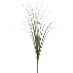 Onion Grass 14
