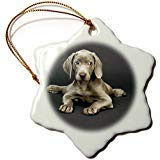 SheilaNelly Weimaraner Puppy Porcelain Snowflake Decorative Hanging Christmas Ornament 3 inch