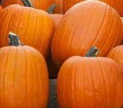 Jack O Lantern Pumpkin Seeds- 30 Seeds (Best Pumpkin Seeds To Plant)