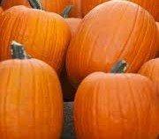 (Jack O Lantern Pumpkin Seeds- 30 Seeds)