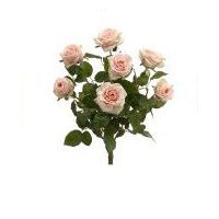 215-confetti-rose-bush-x7-cream-pack-of-6