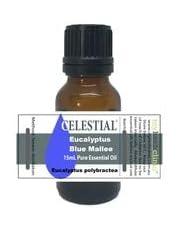 CELESTIAL ® EUCALYPTUS BLUE MALLEE AUSTRALIAN ESSENTIAL OIL - CLEAN AIR SURFACES