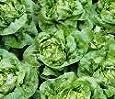 Just Seed Wintersalat, 3-Sorten-Mischung