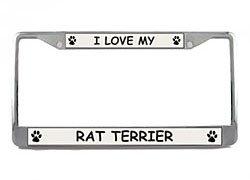 Rat Terrier License Plate Frame (Chrome) 5 Year Warranty