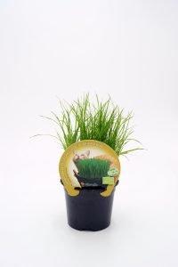 Hierba Para Gatos ECO M-10,5