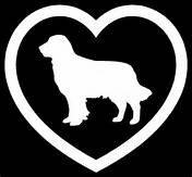 (Golden Retriever Dog Dogs Vinyl Decal Sticker WHITE Cars Trucks Vans SUV Laptops Wall Art 5