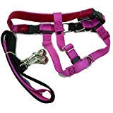 2 Hounds Design Freedom No-Pull Dog Harness Training Package, X-Small, Raspberry