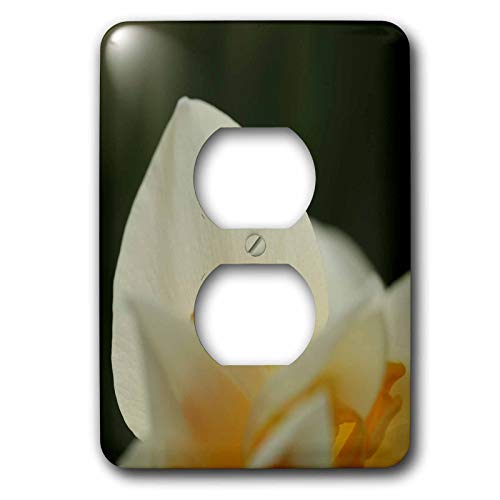 3dRose Stamp City - flowers - Macro photo of a white daffodil petal during the first sign of spring. - Light Switch Covers - 2 plug outlet cover (lsp_307960_6)