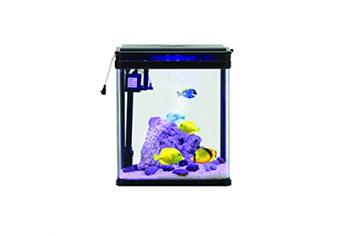 Glass Fish Tank 6 Gallons With LED Lighting System: Curved Corner Clear Aquarium W/Easy To Install Water Filter Pump, Protective Lid With Feeding Flip, Comes W/Detachable Spray Bar And Bio Sponge