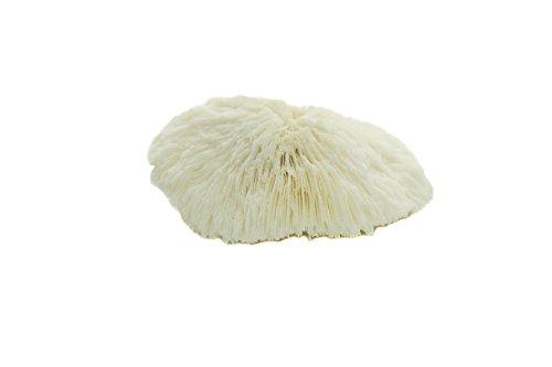 Nautical Crush Trading White Real Mushroom Coral Piece | 3''-4'' | Aquarium Ornament for Decoration | Live Mushroom Sea Coral TM| Plus Free Nautical Ebook by Joseph Rains by Nautical Crush Trading (Image #4)