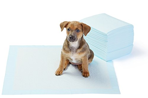 AmazonBasics Regular Pet Dog and Puppy Training Pads - Pack of 50 from AmazonBasics