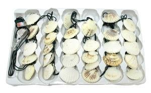 DEI Scallop Shell String Lights