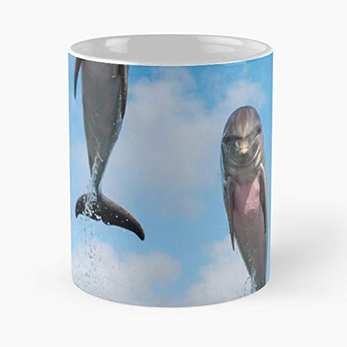 - Atlantic Bottlenose Dolphin Dolphins - White -coffee Mug- Unique Birthday Gift-the Best Gift For Holidays- 11 Oz.
