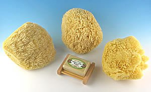 Natural Texturizing Sea Sponge 6-7 Inches