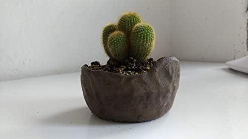 Ceramiche Martignago Plantas Grasas Sobre macetas artesanales, C2 ...