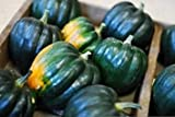 25 Seeds Table King Squash Plant, Acorn Squash (Cucurbita pepo) Garden Vegetable