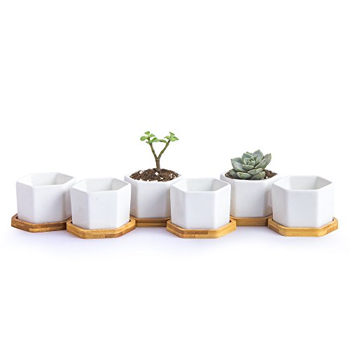 Goldblue White Ceramic Succulent Cactus Planter Pots Succulent Plant Pots Ceramic Hexagon Containers Cactus Planters Set of 6 ()