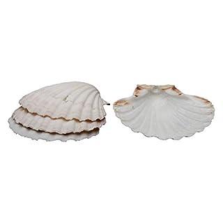 HIC Harold Import Co. 45678/3 Maine Man Baking Shells, 4 Inch, Set of 12, Sea (B0772NQTGG)   Amazon price tracker / tracking, Amazon price history charts, Amazon price watches, Amazon price drop alerts