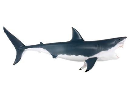 Amazon.com: 20-piece Plastic 4D White Shark Anatomy Model Assembly ...