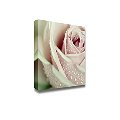 Canvas Prints Wall Art - Close-Up View of Beatiful Pink Rose with Water Drops | Modern Wall Decor/Home Art Stretched Gallery Canvas Wraps Giclee Print & Ready to Hang - 12