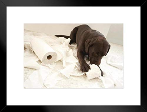 Dog Lying on Bathroom Floor Playing Toilet Paper Photo Art Print Matted Framed Wall Art 26x20 inch
