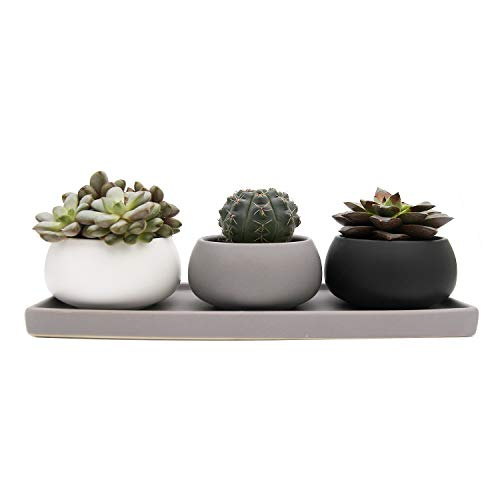 T4U 3 Inch Ceramic Succulent Cactus Planter Pot Container Alms Bowl Shape Set of 3 with Tray - Full Color ()