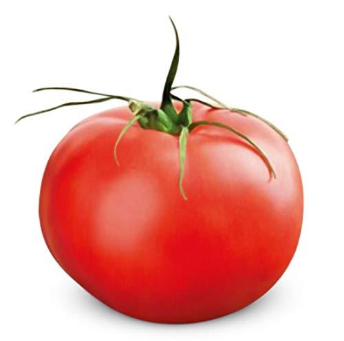 Beefmaster Hybrid Tomato 200 Seeds #995 Item UPC 695928802449 + 2 Free Plant Markers