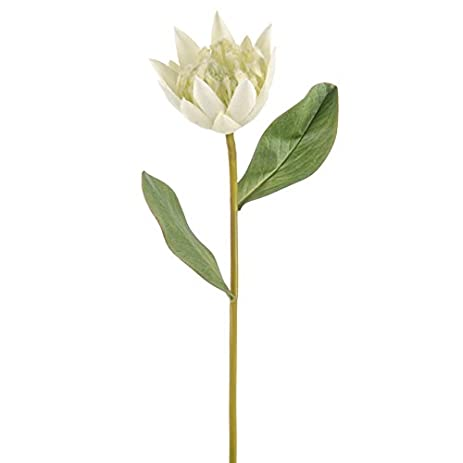 Amazon floristrywarehouse protea artificial single flower stem floristrywarehouse protea artificial single flower stem white 225 inches mightylinksfo