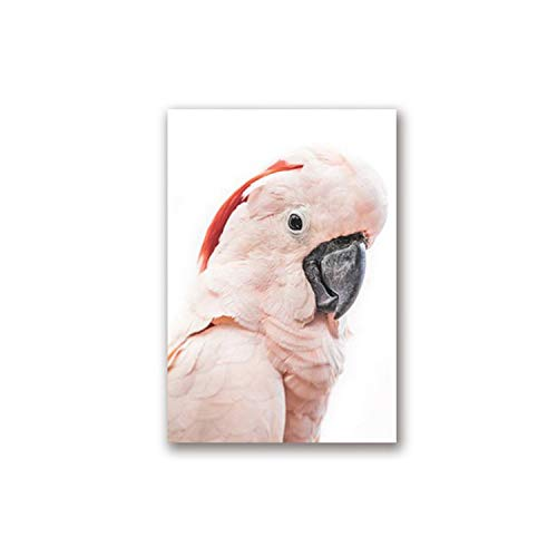 New face Pink Cockatoo Australian Bird Print Tropical Large Animal Poster Canvas Painting Cockatoo Photography Picture Home Wall Decor,30x40 cm No Frame,PH1636