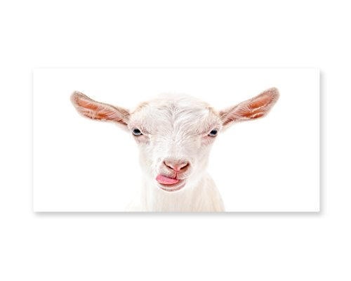 Lunarable Goat Wall Art, Portrait of a Goat with Its Tongue Out Animal Photography White Furry Mammal, Gloss Aluminium Modern Metal Artwork for Wall Decor, 23.5 W X 11.6 L (Make Goat Boy Costume)