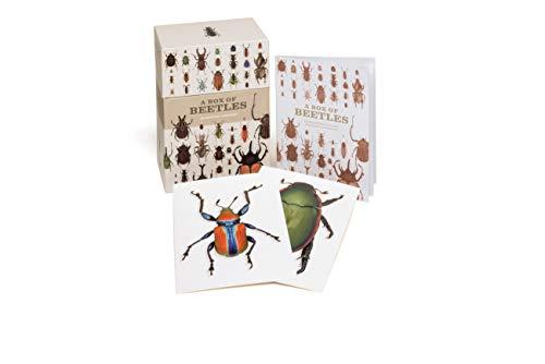 A Box of Beetles: 100 Beautiful Postcards (Spider Postcard)