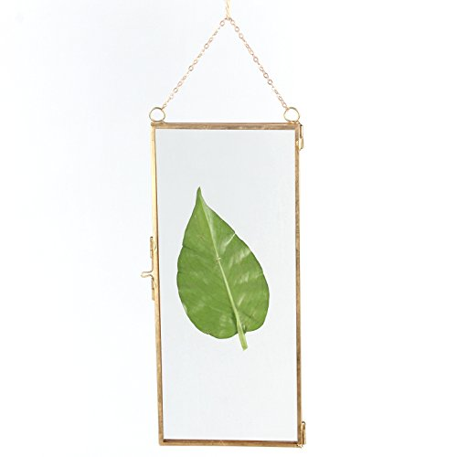 NCYP Modern Wall Hanging Brass Glass Artwork Certificate Photo Picture Frame Geometric Ornament Plant Specimen Clip Display 4 X 9 inchs