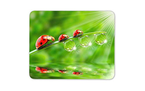 Colourful Ladybird Mouse Pad - Ladybug Bug Insect Fun Mousepad Mouse Mat Gift Computer -8245