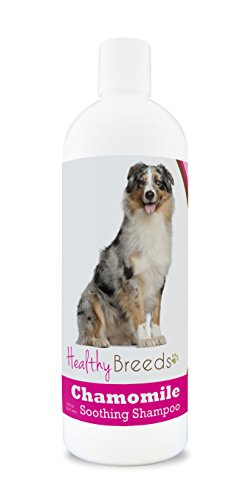 Healthy Breeds Chamomile Dog Shampoo & Conditioner with Oatmeal & Aloe for Australian Shepherd  - OVER 200 BREEDS - 8 oz - Gentle for Dry Itchy Skin - Safe with Flea and Tick Topicals ()