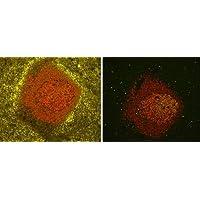 Vector(R) TrueVIEW(TM) Autofluorescence Quenching Kit
