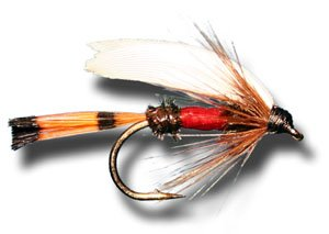 (Royal Coachman Wet Fly Fishing Fly - Size 12 - 3 Pack)