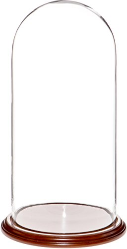"Plymor Brand 9.75"" x 20"" Glass Display Dome Cloche (Walnut Veneer Base)"