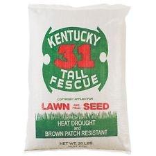 Kentucky 31 Fescue Seed - 8